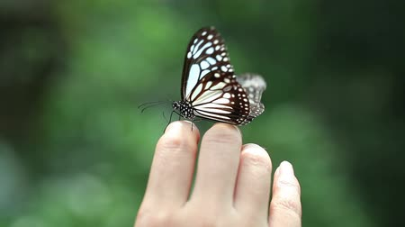 rovarok : Butterfly On The Human Hand