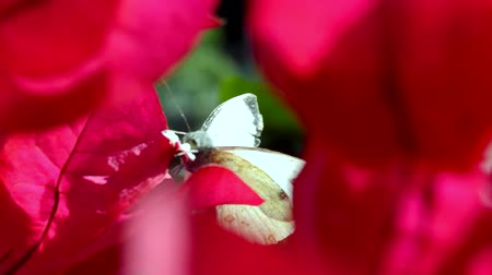Closeup of butterfly on a  flower red
