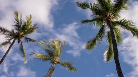 Time lapse video shows three palm trees blowing in the wind with fast moving clouds Wideo