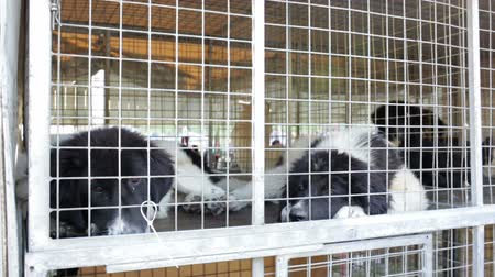 unlucky : Homeless and ownerless sad dogs are kept in cages.