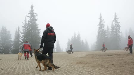 rescue dog : Sofia, Bulgaria - April 20, 2016: Men and their dogs at the search and rescue team at Bulgarian Red Cross are participating in a training in the foggy mountain.