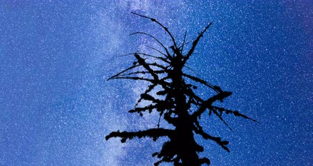 A view of the stars of the Milky Way. SIlhouette of a dead mossy tree in the foreground. Night sky nature summer landscape. Perseid Meteor Shower in 2016. 4k timelapse movement.