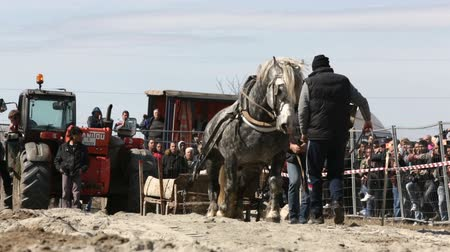 romênia : Sofia, Bulgaria - 3 March, 2017: Horses and their owners participate in a heavy pull tournament. The animals has to pull a load of hundreds of kilograms on a 30 m. track.