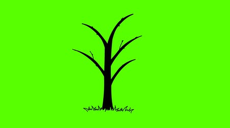 crescimento : Growing tree and fruit. Green screen Vídeos