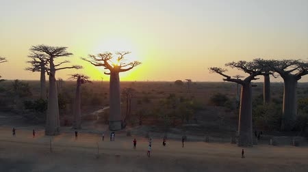 madagaskar : Aerial: Sunset at the avenue of the baobabs in Madagascar