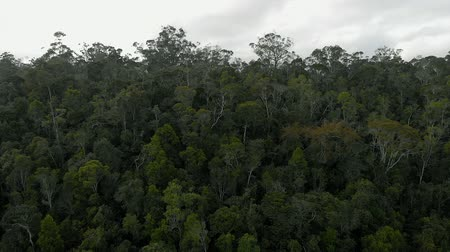 Aerial: Beautiful footage of rainforest in Madagascar Stok Video