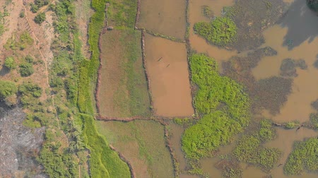 Aerial: View of the rice fields in Madagascar