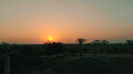 madagaskar : Aerial drone view of sunset at the Avenue of Baobab in Madagascar