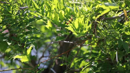 Sun on leaves Stok Video