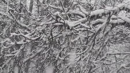 hóesés : Snow falls on the branches of trees
