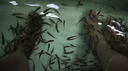 garra : Fish massage in Thailand Stock Footage