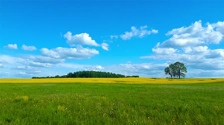 terep : Beautiful summer landscape of meadows with trees. Lithuania Stock mozgókép