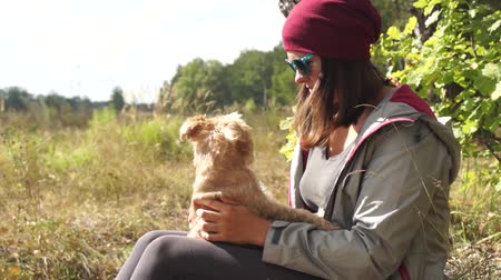 гриф : Young woman plays with small dog Griffon Bruxellois breed outdoors Стоковые видеозаписи