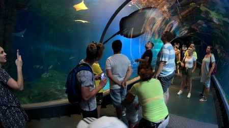 wrocław : Wroclaw, Poland - July 31, 2018: People attend underwater tunnel in oceanarium in city zoo