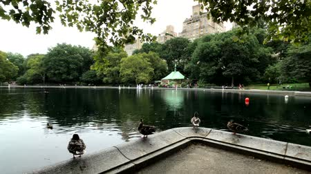 américa central : New York, USA - September 6, 2018: People visit central park in Manhattan at day time at summer, ducks near the pond at foreground