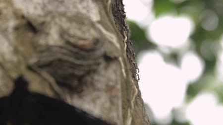 clip of ants then a black butterfly on a side of a tree Dostupné videozáznamy