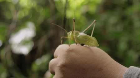 clip of grasshopper jumping off a hand