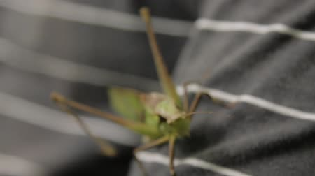 grasshopper : clip of grasshopper