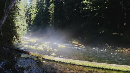 mc : The McKenzie River along the McKenzie river trail on the way to the Tamolitch Pool near Blue River, Oregon. Stock Footage