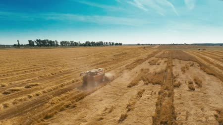 buğday : Aerial shot of a harvesting combine working in a wheat field Stock Stok Video