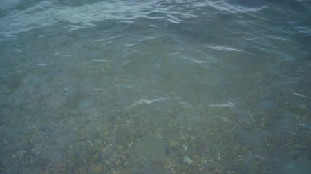 lüktet : Sea clear water. Many jellyfish pulsating in seawater. A large number of jellyfish pulsate in seawater