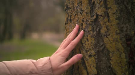 sentido : Close up of female hand touching a tree trunk in the forest. Young girl stroking the bark of a tree. Forest or park in the background.
