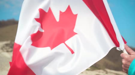 canadian maple leaf : Male hand holding a flag of Canada. The flag of Canada develops in the wind against a clean blue sky.
