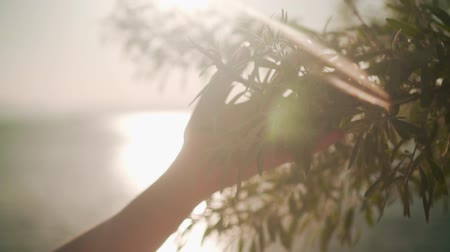 Woman sliding hand of fresh green foliage in slow motion. Female hand touching the surface of bright bushes in the sunset sun. The concept of human unity with nature