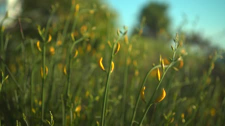Orange flowers in the sunset sun, in the background green trees. The wind blows on the orange flowers at sunset.