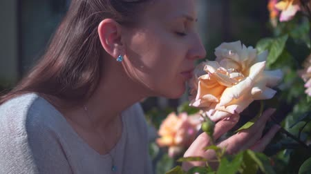 A woman gently touches and sniffs peach roses. A beautiful woman and huge peach-smelling roses blooming in the garden. The concept of human unity with nature