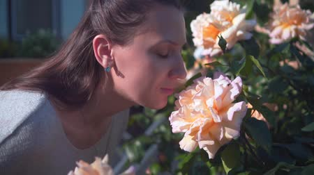 A woman gently touches and sniffs peach roses. A beautiful woman and huge peach-smelling roses blooming in the garden.