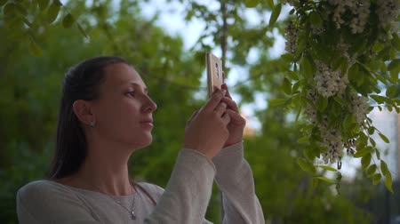 akacja : A young woman photographs a flowering white acacia on the phone in a park. Woman and blooming white trees in the park.