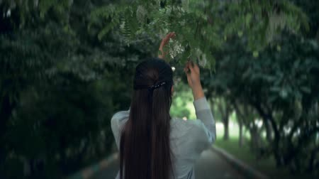 The woman gently touches and sniffs white acacia. The woman and a beautiful smelling acacia blooming in the park. The girl is standing back in the frame.
