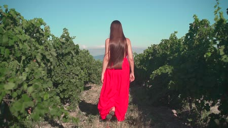 viticultura : A young girl in a red dress is walking through the vineyard. A free girl with long hair walks backwards in the frame through the vineyard, the camera follows her.