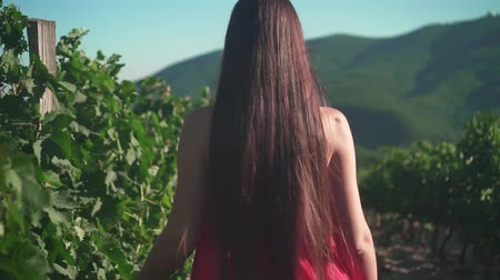 szőlőművelés : A young girl in a red dress is walking through the vineyard. A free girl with long hair walks backwards in the frame through the vineyard, the camera follows her.