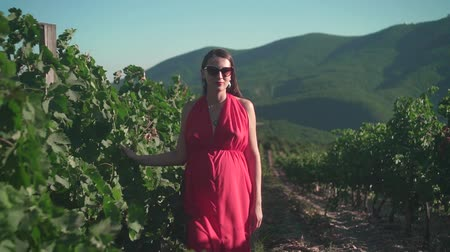 viticultura : A pregnant girl in a red dress is walking through the vineyard. A pregnant girl with long hair in glasses walks through the vineyard. Stock Footage