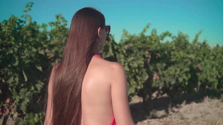 viticultura : A young girl in a red dress is walking through the vineyard. A free girl with long hair walks backwards in the frame through the vineyard, the camera follows her. Close-up.