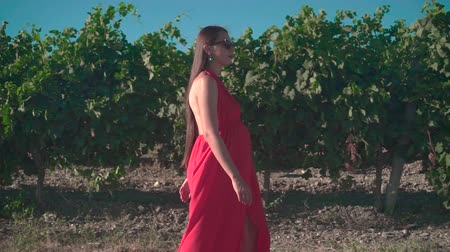 szőlőművelés : A pregnant girl in a red dress is walking through the vineyard. A pregnant girl with long hair in glasses walks through the vineyard. Stock mozgókép