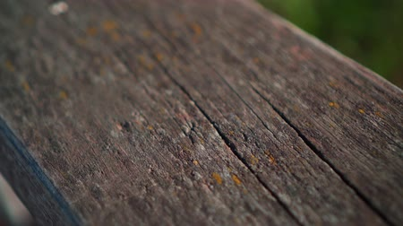 polido : Closeup real old wood texture Vintage background. Old plaque covered with painted paint close up. Stock Footage