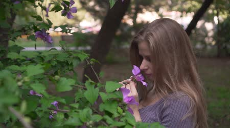 cheirando : Cute young girl sniffs and touches purple hibiscus flowers. Happy girl in a gray dress near a blooming hibiscus tree.