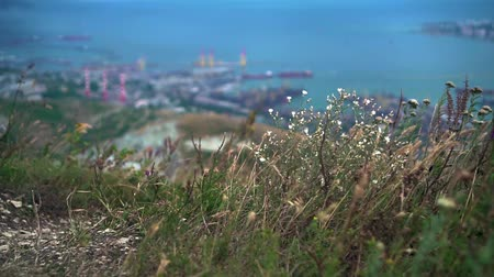 enviroment : Panoramic view of the city from the heights of the mountains. Footage of the city with a bay, port, buildings, mountains. Ariel, view of Novorossiysk. Russia. Foreground blooming field grass. Stock Footage