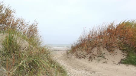 baltık : Grass on the Baltic sea coast. Windy weather. Wide shot.