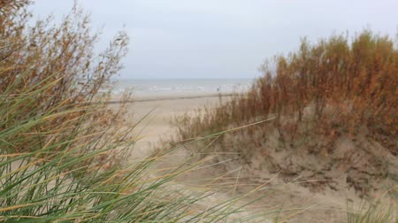 baltık : Grass on the Baltic sea coast. Windy weather. Medium shot. Stok Video