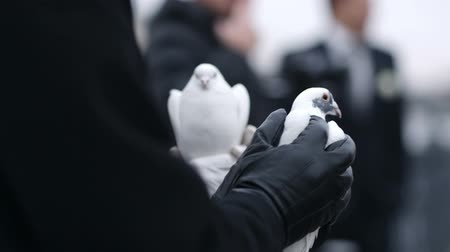 gołąbki : Woman holding a dove in her gloved hands as she waits for the sign to release it as a symbol of good luck at a wedding ceremony
