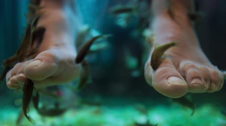 терапия : Fish spa pedicure wellness skin care treatment with the fish rufa garra, also called doctor fish, nibble fish and kangal fish