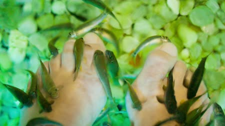 garra : Extreme close-up shot of female feet under fish spa procedure