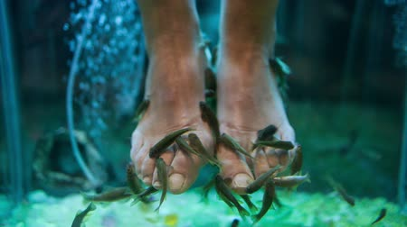 garra : Close-up shot of female feet in aquarium with Garra Rufa fish. Spa pedicure and treatment