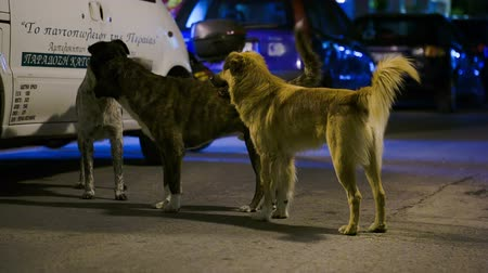 abandoned city : THESSALONIKI, GREECE - AUGUST 11, 2014: Three stray dogs standing on the road at night, they walk away as car coming Stock Footage