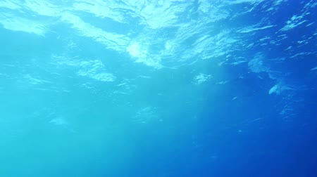 jasno : Slow motion of clear blue sea water. View from the depth. Wavy surface sparkling in sun light coming through it