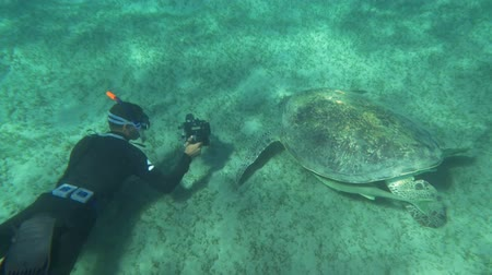 vadon élő állatok : Slow motion of diver photographer shooting big sea turtle with underwater camera. Some fish hiding under its shell